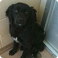 Adopt A Pet :: Brandi - Denver, CO