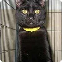 Adopt A Pet :: Hilton - Shelton, WA
