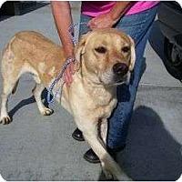 Adopt A Pet :: CONRAD - San Diego, CA