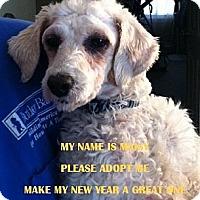 Adopt A Pet :: RI - MAISY - W. Warwick, RI
