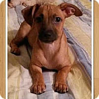 Adopt A Pet :: Ditto - Encinitas, CA