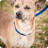 Adopt A Pet :: Emory - Gainesville, FL