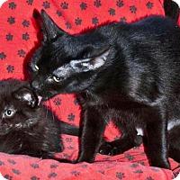 Adopt A Pet :: Miette - Sunderland, ON