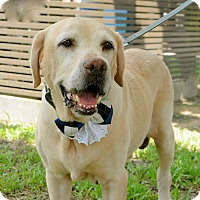 Adopt A Pet :: Larry - Surrey, BC