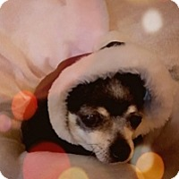 Adopt A Pet :: Noelle - Mesa, AZ