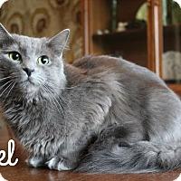 Adopt A Pet :: Angel - Arlington, TX