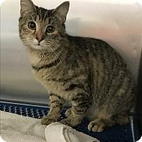 Adopt A Pet :: Punky - Salisbury, NC