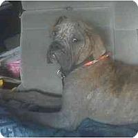 Adopt A Pet :: Slugger - Lake Forest, CA