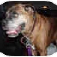 Adopt A Pet :: Professor Rocko - Sunderland, MA
