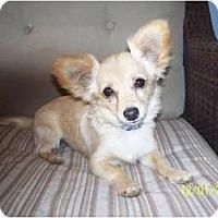 Adopt A Pet :: Bobo - Andrews, TX