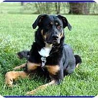 Adopt A Pet :: Star - Hamilton, ON