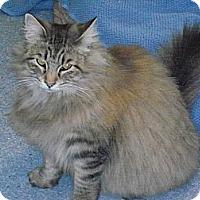 Adopt A Pet :: Picachu - El Cajon, CA