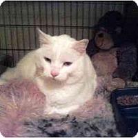 Adopt A Pet :: Lancelot - Alexandria, VA