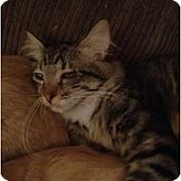 Adopt A Pet :: Harley - Wenatchee, WA