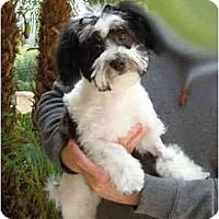 Adopt A Pet :: Beckham - ORANGE COUNTY, CA