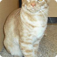 Adopt A Pet :: Cashew - Chattanooga, TN