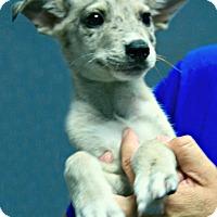 Adopt A Pet :: Lennie - Lufkin, TX
