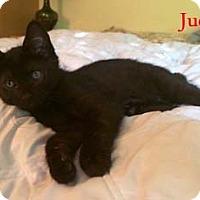 Adopt A Pet :: Judd - Merrifield, VA