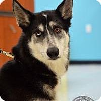 Adopt A Pet :: Fig - Salt Lake City, UT