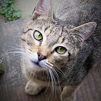 Adopt A Pet :: Michi - Gonzales, TX