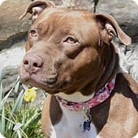 Adopt A Pet :: Mocha - Glenolden, PA