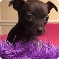 Adopt A Pet :: Teeny - Hartford, CT