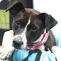 Adopt A Pet :: Everly - West Grove, PA