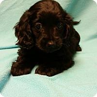 Adopt A Pet :: Darla - Hazard, KY
