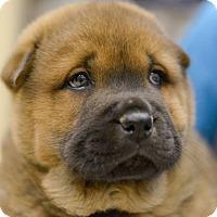 Adopt A Pet :: Kyi - Tillsonburg, ON