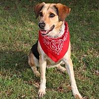 Hound (Unknown Type) Mix Dog for adoption in Austin, Texas - Ginnie