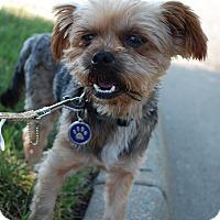 Adopt A Pet :: Arlo - Richmond, VA