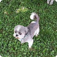 Adopt A Pet :: Tonka - Schofield, WI