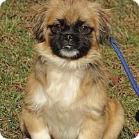 Adopt A Pet :: Gizmo (11 lb) Video! - Sussex, NJ