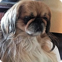 Adopt A Pet :: Sonny - Portland, ME