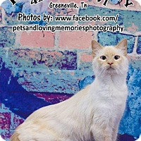 Adopt A Pet :: Jasmine - Greeneville, TN