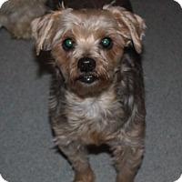 Adopt A Pet :: Jordan - Homer, NY