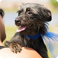 Adopt A Pet :: Moondoggie - Santa Fe, TX
