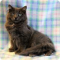 Adopt A Pet :: Zeke - Greensboro, NC