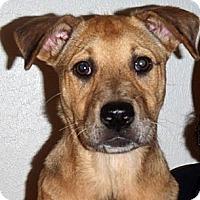 Adopt A Pet :: Houston - Houston, TX