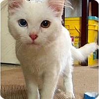 Adopt A Pet :: Koda - Alexandria, VA