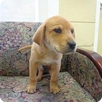 Adopt A Pet :: Apollo - Crawfordville, FL