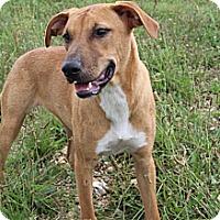 Adopt A Pet :: Nala - Hagerstown, MD