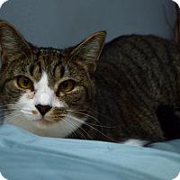 Adopt A Pet :: Peeta - Pittsburgh, PA