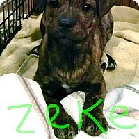 Adopt A Pet :: Zeke - Richmond, VA