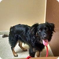 Adopt A Pet :: Emily - Irmo, SC