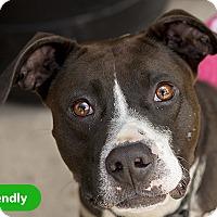 Adopt A Pet :: Reno - Durham, NC