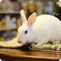 Adopt A Pet :: Marion - Williston, FL