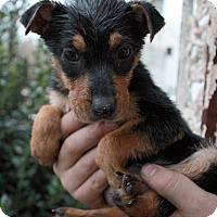 Adopt A Pet :: Hershey - Youngsville, NC