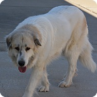 Adopt A Pet :: Fluffy - Pacific, MO