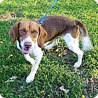Adopt A Pet :: Rastas - Cookeville, TN
